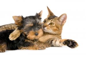 general pet health