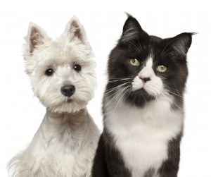 Make obtaining pet insurance your first priority!
