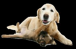 Dog_Old