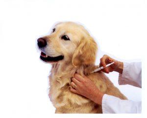Dog_Vaccination