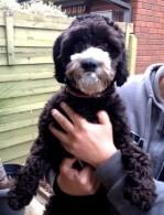 Dog_Marley Mc_FBook Comp Winner