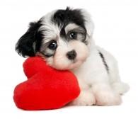 Dog_shutterstock_89924749 (2)
