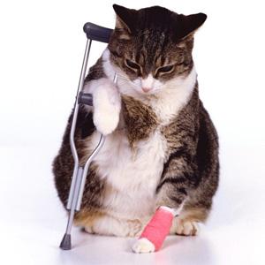 Cat_Injured (Online Image)