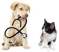 Dog&Cat_Stethoscope_shutterstock_171647012