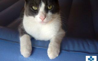Cat_Clay Kenny