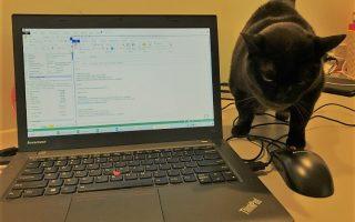 Cat_Stray2
