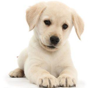 Puppy_Lab2