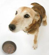 Dog_Eating