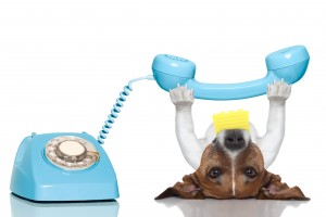 Dog_Phone_shutterstock_166688975_