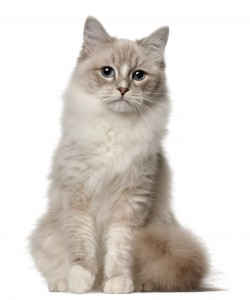 Cat_shutterstock_91229093 (1)