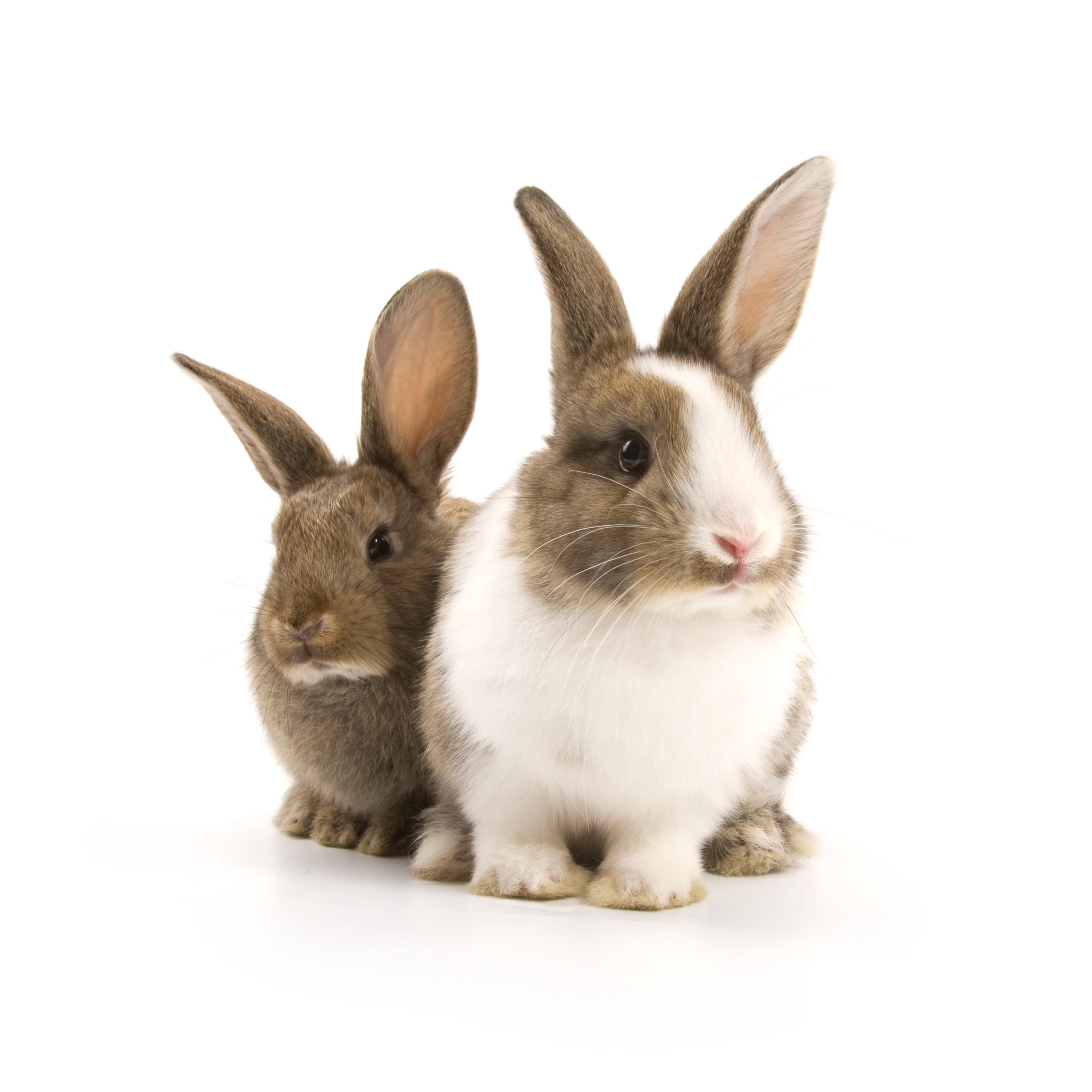 rabbits_shutterstock_57252469