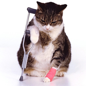 Cat_Injured (Online Image)