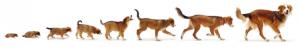 Dog_Diff Sizes