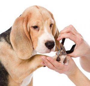 Dog_Nail Trim