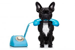 Dog_Phone_shutterstock_254922814 (2)